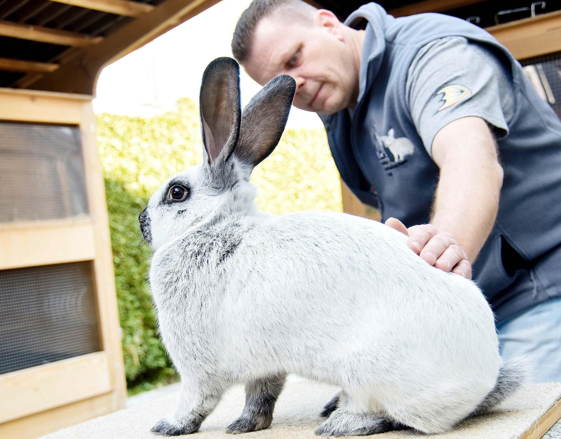 «Rabbit-Tom» und seine Tiere: Er begehrt sie, er verzehrt sie