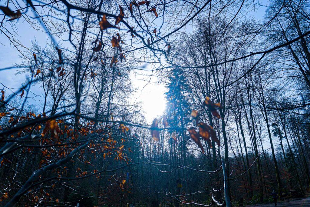Wald Mit Aesten R1404570 Opt